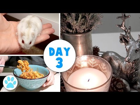 Hamsters | Mouse Update | More Decorating | Vlogstice 2017