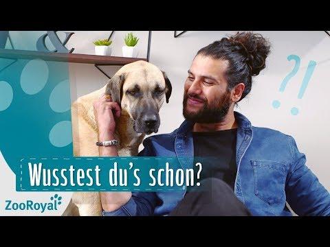 10 Dinge, die du über Hunde nicht wusstest | Rund um den Hund mit Masih Samin | ZooRoyal