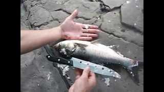 Рыбе по морде