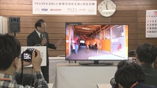 【HTBニュース】馬の8K映像を5Gで伝送 画期的実験 新冠で