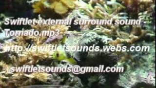 Swiftlet Surround Sound for swiftlet farms - Tornado.mp3
