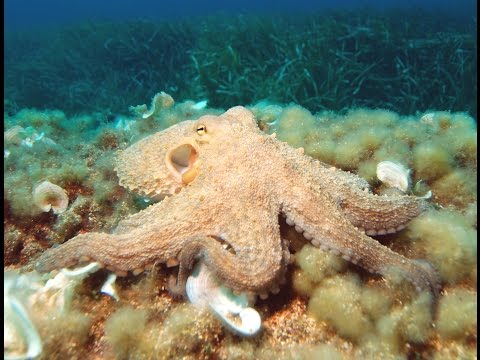 Deep Sea Cephalopods in the North Atlantic - Science Cafe