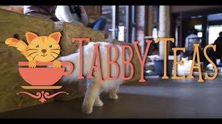 Tabby Teas Cat Cafe | Sheffield | Blink Vivid Video