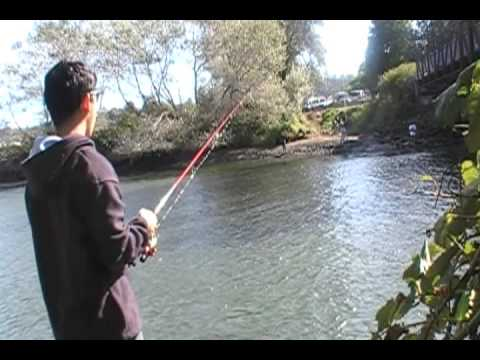 salmon fishing in GREEN RIVER TUKWILA WA