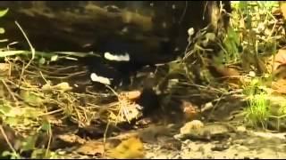 Rache der Natur Doku deutsch