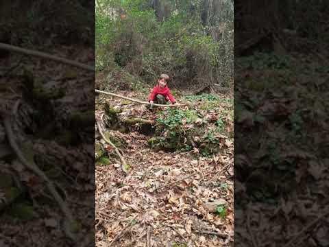 Odun Kırmaya çalışırken
