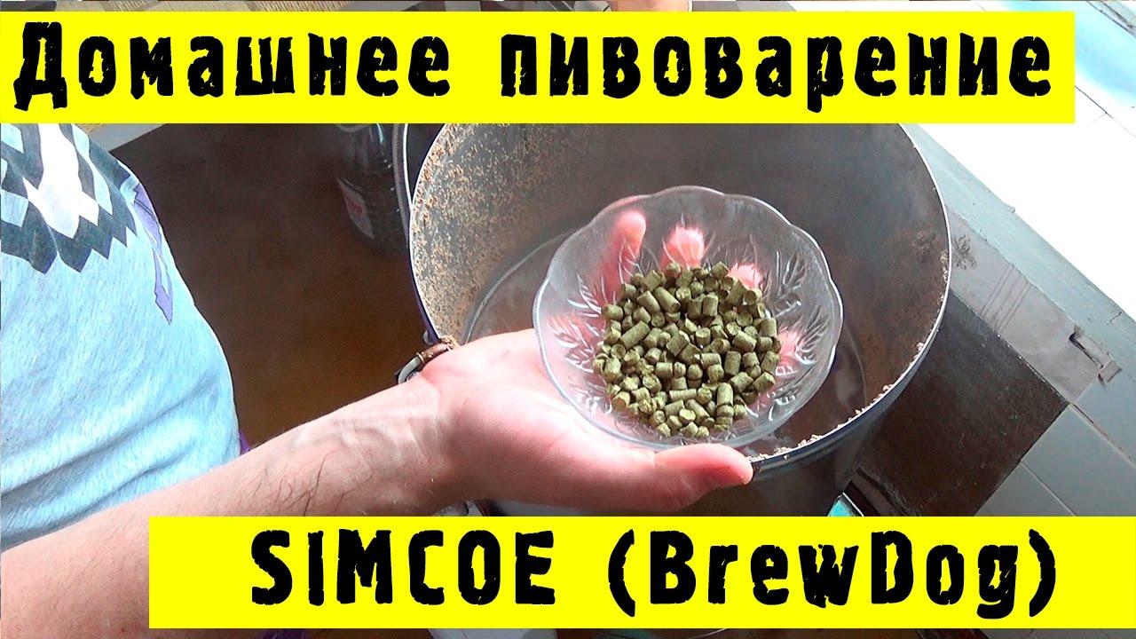 приготовление домашнего пива по старинным рецептам