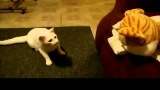 Смешные пугливые коты!