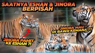 Download JINORA HARUS PISAH SAMA ESHAN ?! ADA APA INI ??