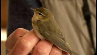 BBC SpringWatch - Winter bird migration
