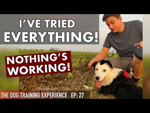 Watch What I Do When My Training Isnt Working!
