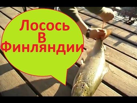 рыбалка на форель и лосося в финляндии