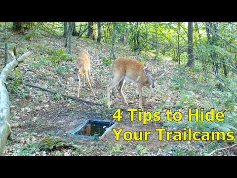 4 How-to Tips For Hiding Your Trailcams From Deer And Thieves
