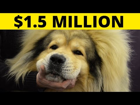 Most Expensive Dogs You Won't BELIEVE Exist