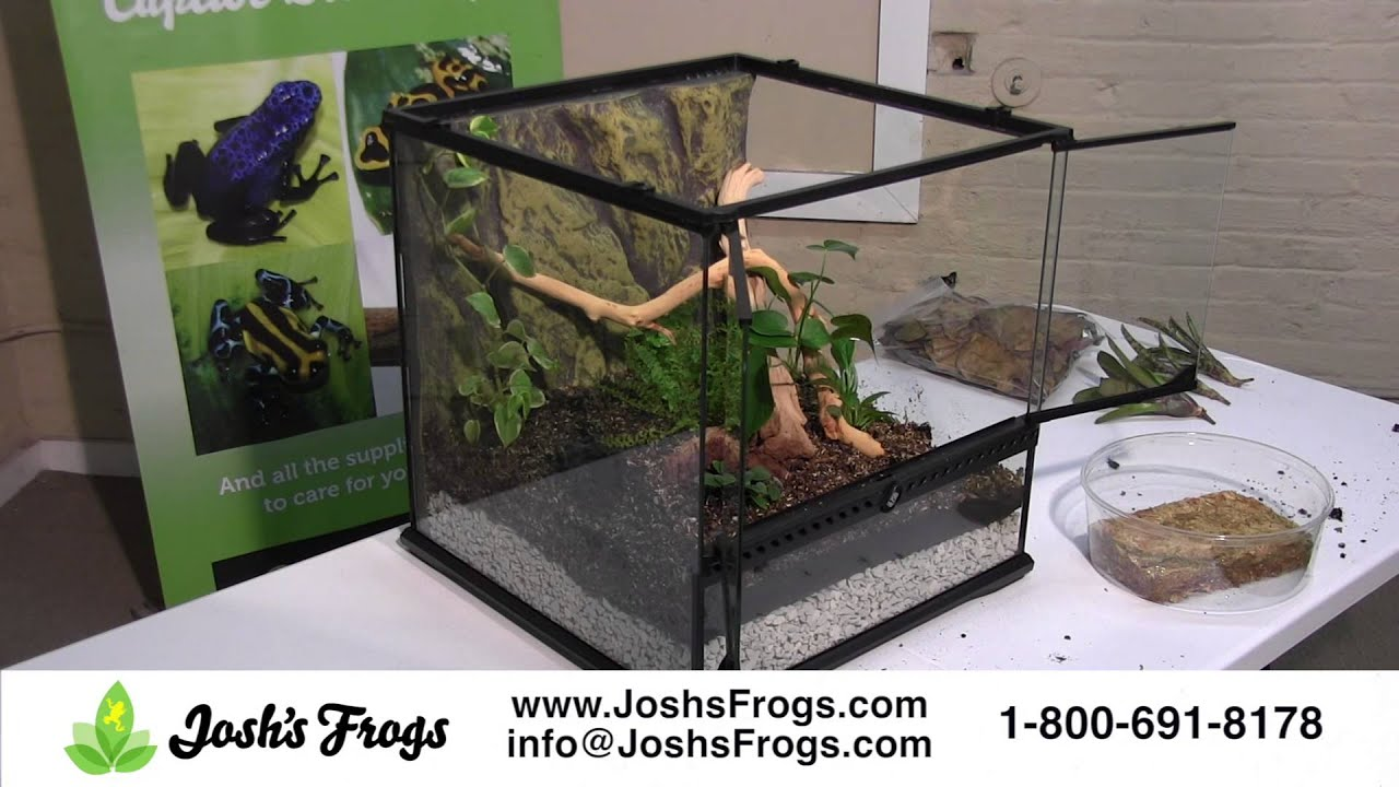 Dart Frog Vivarium Set Up Start To Finish Youtube