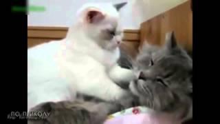 Милые щенята и котята смотреть всем