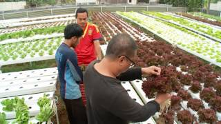 NET17 - Go Green Tehnik Hidroponik Pada Sayuran