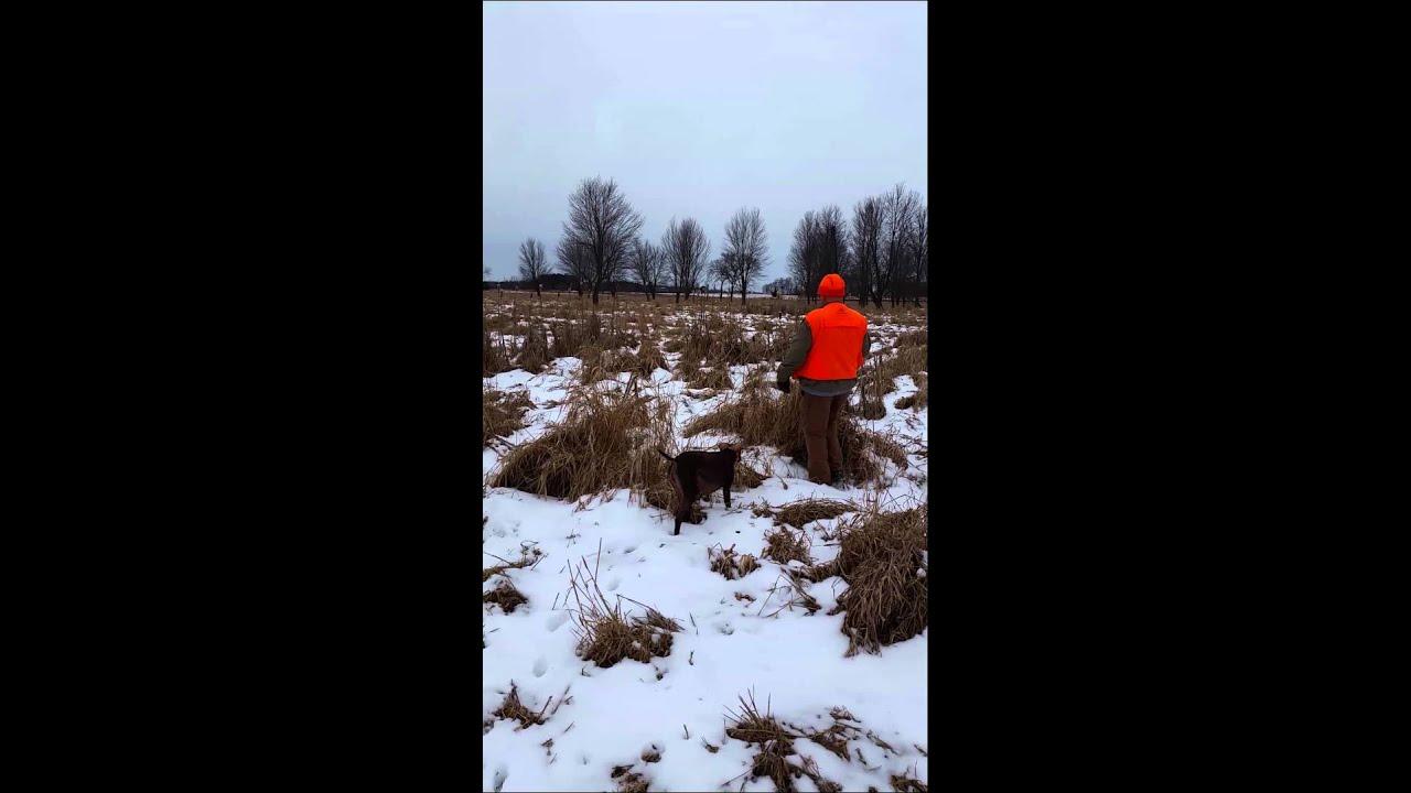 Put And Take Pheasant Hunt