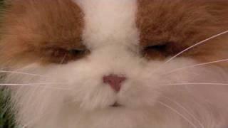 FurReal Friends Lulu My Cuddlin Kitty Demo with Paws