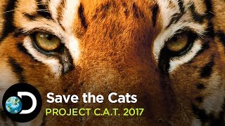 Save the Cats   Project C.A.T. 2017