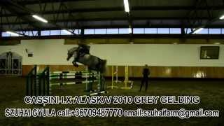 24. CASSINI I. X ALASKA (HORSES FOR SALE)