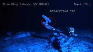 Hagfish slime deters predators