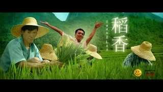 Hương Lúa cover việt version ( stac Jay Chou ) - Tuấn Cường ft Uy Jun Pyo