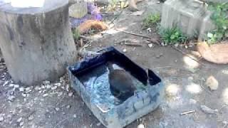 Burung wak-wak denak.MP4