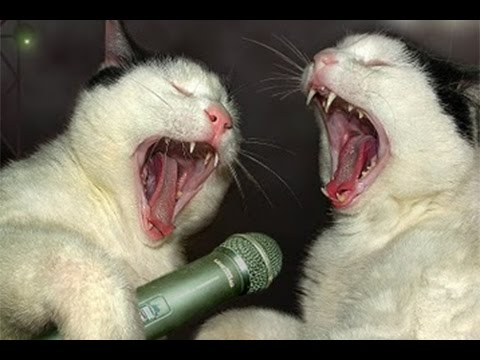 PETS sing ''JINGLE BELLS''
