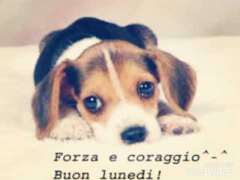 Buongiorno e buon lunedi youtube for Buon lunedi whatsapp