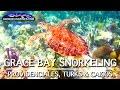 Best Grace Bay Snorkeling | Turks & Caicos
