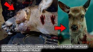 La Enfermedad del Ciervo Zombie es Real y ahora se puede contagiar en Humanos
