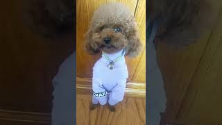 Look at these cute and funny puppies dogs 3726
