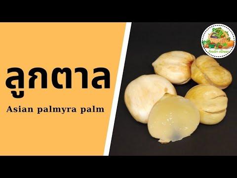 ประโยชน์ของลูกตาล | Asian Palmyra Palm | กินผักเป็นยา