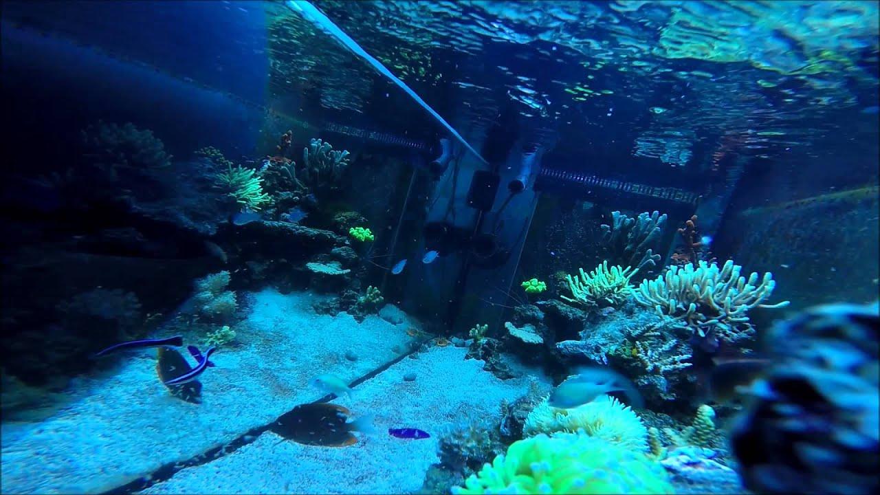 meerwasser fische f ttern reef fish feeding youtube. Black Bedroom Furniture Sets. Home Design Ideas