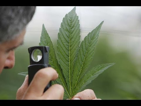 From Under the Influence: The Government Just Made Marijuana Illegal...Again...Still !
