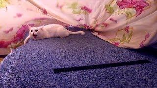 Кошка мешает стелить постель