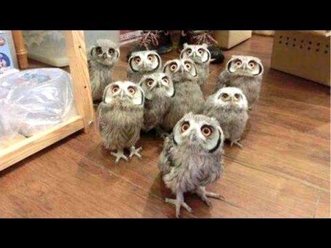 Owl - een grappige uilen en leuke uilen. compilatie | nieuwe