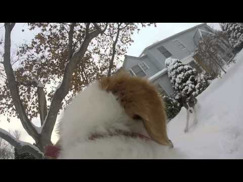 "Riley the Brittany - Episode 2: ""Snow Day"""
