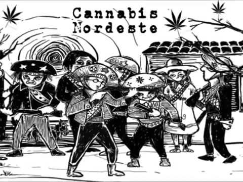 Abertudo do Canal Cannabis Nordeste
