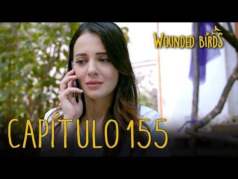 Wounded Birds (Yaralı Kuşlar)   Capítulo 155 En Español