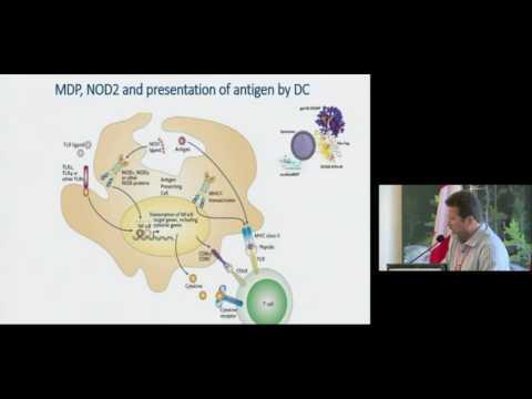 """""""Advanced nanofibre and liposome-based biocompatible nanomaterials for construction of vaccines"""""""
