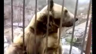 Стеснительный медведь  Потрясающе Удивительно Самое Классное видео супер шикарно  MusVid net
