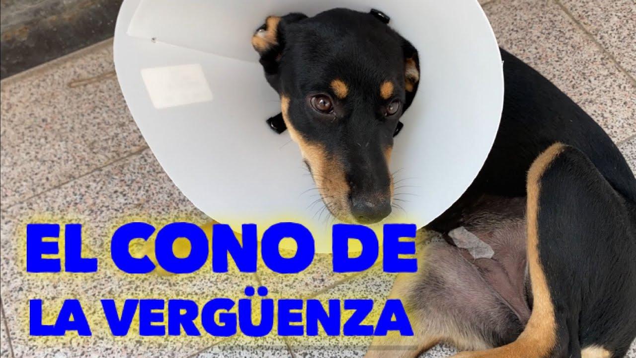 Esta cachorra es muy traviesa y lo volvio a hacer! Dona y salva una vida!