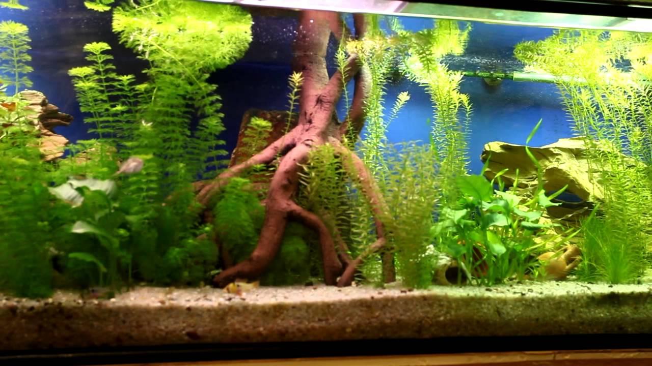 Panor mica de mi acuario de 465 litros youtube for Acuario comunitario