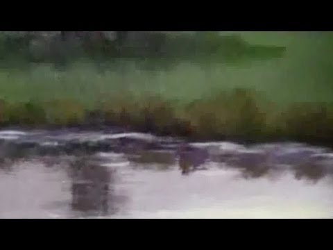 How to Paint Water Reflections - Acrylic Painting Lesson ...