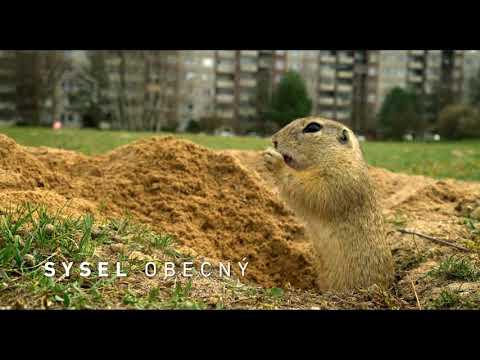 Planeta Česko –Trailer