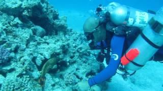 видео Курс IART Recreational Trimix