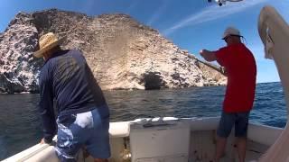 pesca con poppers