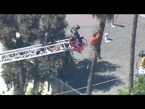 Tree Trimmer Rescue - Raw Video - April 9, 2015